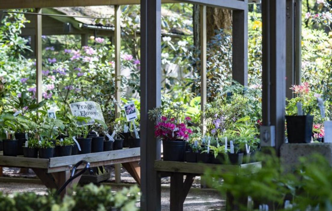 Order Plants/Seeds/Pollen